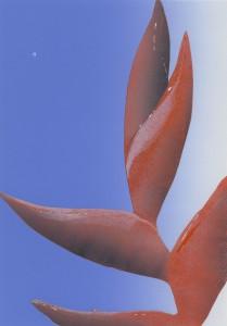Bluete 2b-30 x 21 cm-Linol-7Varianten-2013_410Euro