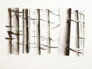 Friederike Jokisch, Lichtwald III, 2006, 40x50cm, Lithografie