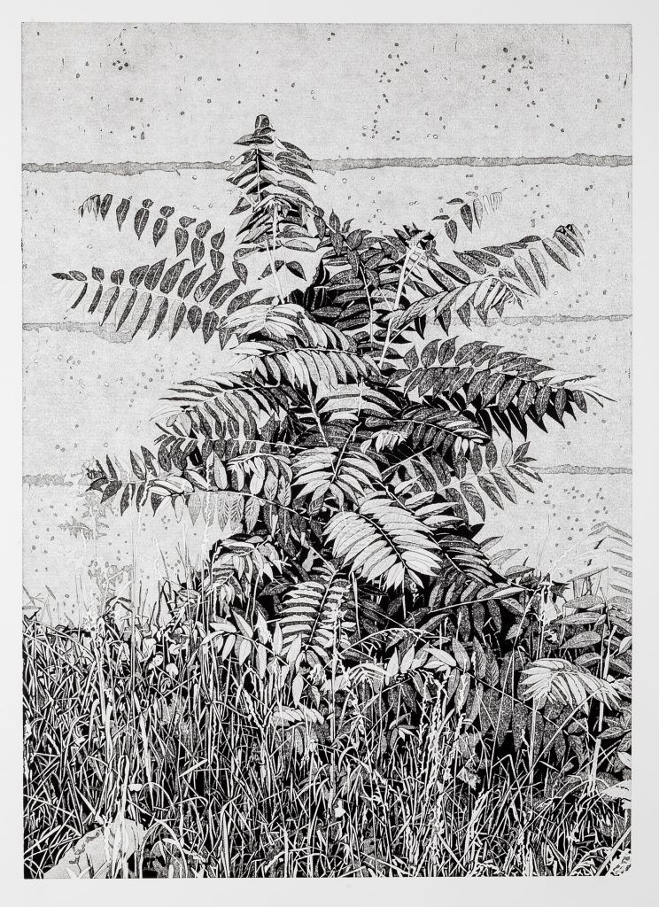 Philipp Hennevogl, Essigbaum, 2017, 55x39,1cm, Linolschnitt